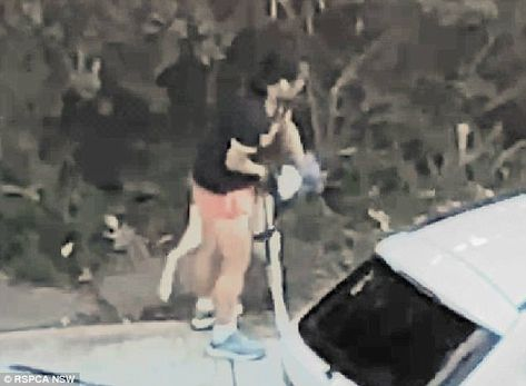 Woman Caught On Camera Placing Plastic Bag Over Greyhound S Head Greyhound Pets She Dog