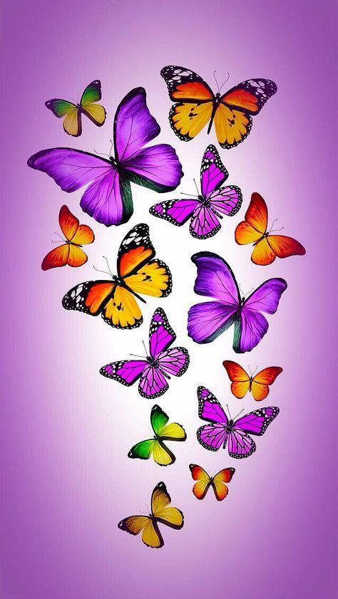 42+ New Ideas for flowers orange beautiful butterflies