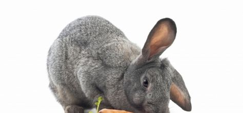 How to make to life of your old rabbit easier, read it here