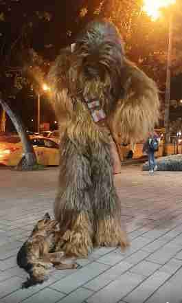 Rescue Dog Freaks Out When He Runs Into Chewbacca On The Street