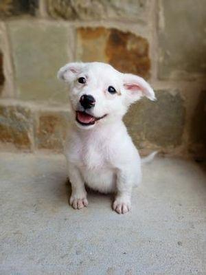 Santa Fe Tx Spaniel Unknown Type Meet Bolt A Dog For Adoption Kitten Adoption Pets Dog Adoption