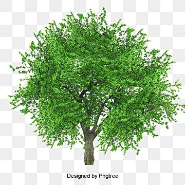 Lush Tree Tree Clipart Maunsell Trees Png Transparent Clipart Image And Psd File For Free Download In 2021 Tree Photoshop Tree Clipart Watercolor Tree