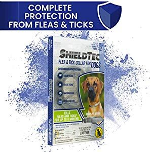Shieldtec Flea And Tick Collar For Dogs 12 Weeks Of Age Or Older One Size Fits All 6 Months Protection In 2020 Flea And Tick Fleas Ticks