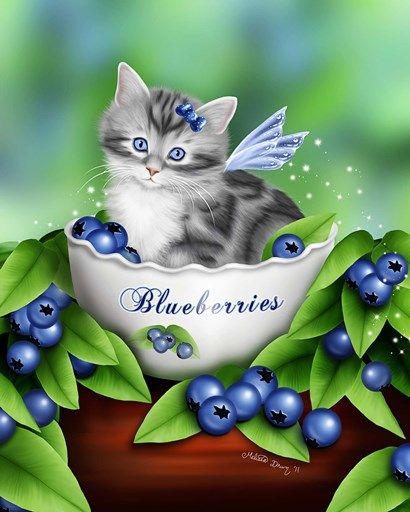 Blueberry Kitten