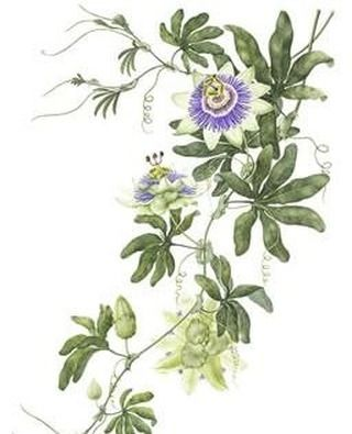 Passion Flower Print Takes Inspiration From Old Botanical Drawings And Was Designed And Hand Illustrate Flower Drawing Flower Illustration Botanical Drawings