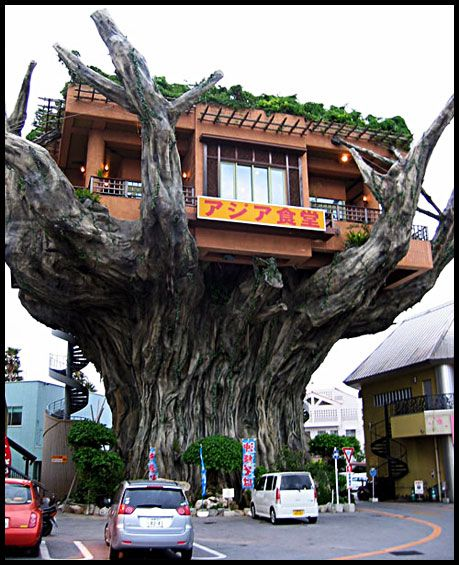 Incredible tree restaurant Naha is the capital of Okinawa Prefecture, the tropical island group south of mainland Japan Unusual Buildings, Interesting Buildings, Amazing Buildings, Foto Nature, Tree Restaurant, Cool Tree Houses, Tree House Designs, Unique Trees, Old Trees