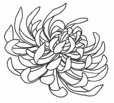 Flowers Art Drawing Tattoo Deviantart 53 Ideas For 2019 Chrysanthemum Drawing Flower Art Drawing Flower Drawing