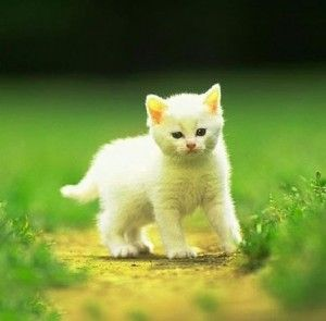 Cute Dp Images Pictures Photo Wallpaper Animals Cats And Kittens Happy Kitten