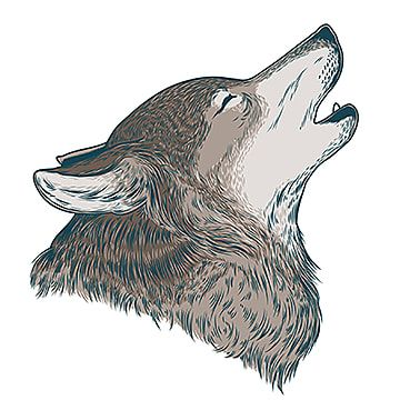 Vector Illustration Of A Howling Wolf Red Dogs Wolf Clipart Wolf Howling Png And Vector With Transparent Background For Free Download Wolf Howling Wolf Images Dog Vector