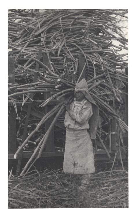 test image of plantation worker in Hawaii