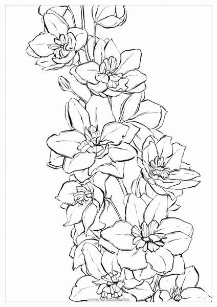 - Water Coloring Book For Adults New Image Result For Delphinium Flower  Drawing Flowersdrawing In 2020 Flower Drawing, Delphinium Flowers, Birth  Flower Tattoos