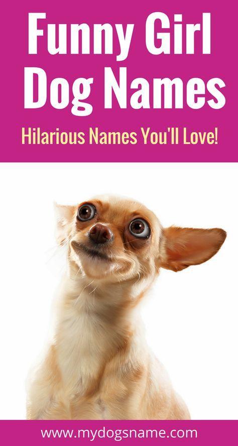 Funny Dog Bames Https Www Blencathra Net Funny Dog Bames In 2020 Girl Dog Names Funny Girl Dog Names Funny Dog Names