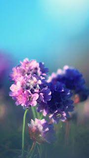 أجمل خلفيات ايفون وردي Pink Wallpaper Iphone Flower Iphone Wallpaper Purple Flowers Wallpaper Cute Flower Wallpapers