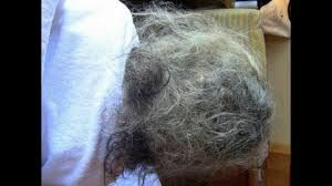 Image Result For How To Untangle Matted Hair Matted Hair Matted Dog Hair Hair