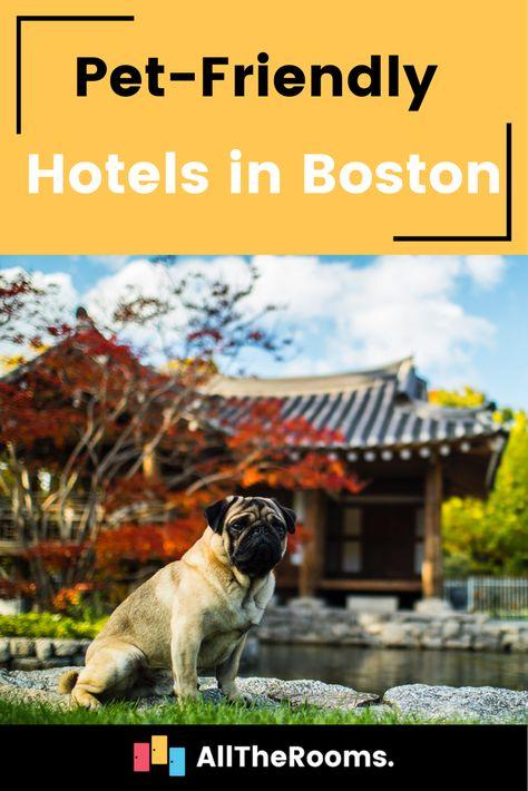 The 6 Best Pet Friendly Hotels In Boston Pet Friendly Hotels Pets Pet Travel