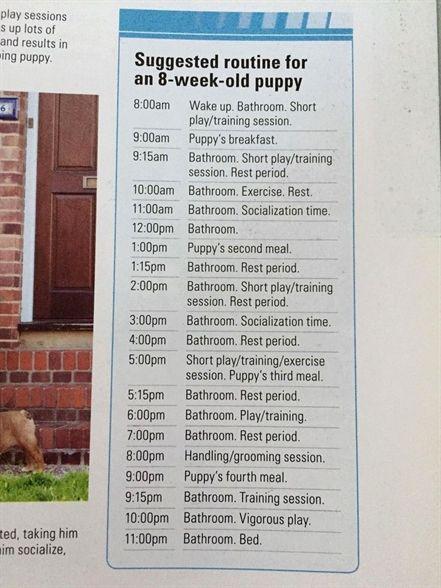 Dog Training For Puppies Dog Training Roseville Ca K9 1 Dog Training Phase 3 Dog Training Books Posi Puppy