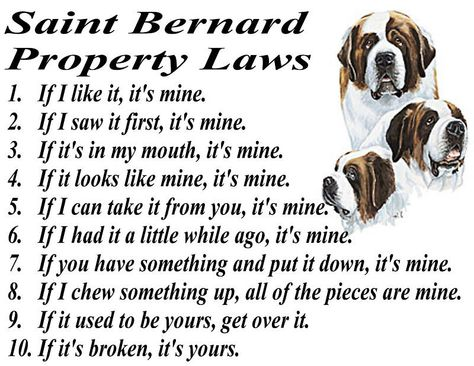 As a human who shares their home with a Saint Bernard, I know these words to be true.