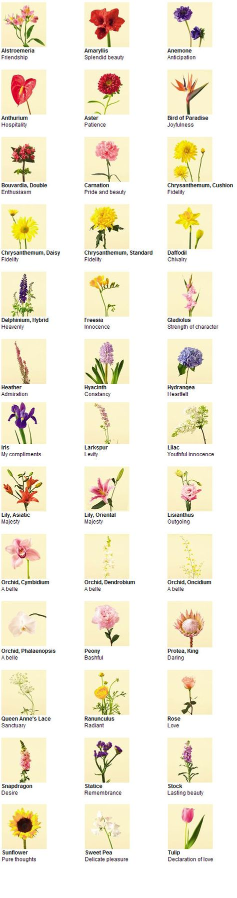 types of flowers pictures and names | Types of Flowers