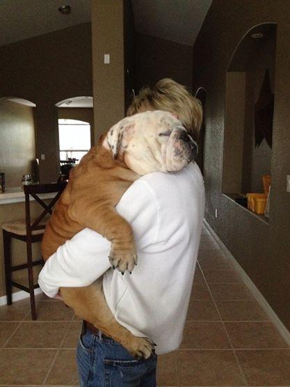 Resultado de imagen para Bulldog and owner hug