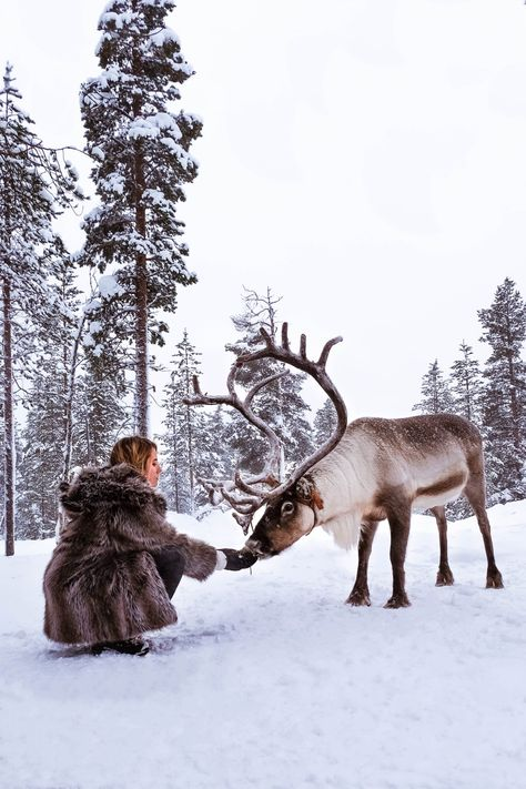 BEST THINGS TO DO IN LAPLAND, FINLAND ~ Find Me Here Travel Blog