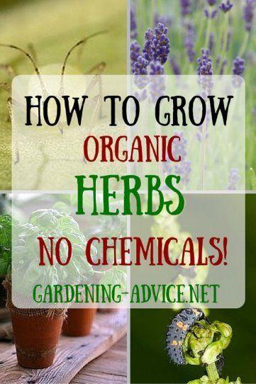 Growing Organic Herbs - Natural Herb Gardening Without Toxic Sprays!