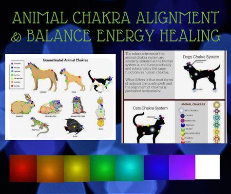 Animal Reiki Chakra Alignment  Balance Energy Healing