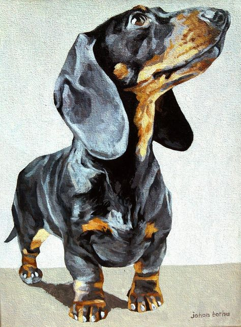 Dachshund by Johan Botha