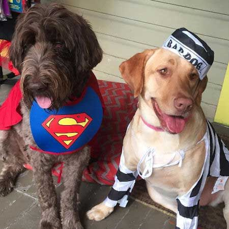 Find The Best Dog Costume For Halloween Cool And Easy Costume Ideas For 2019 Dog Costumes Funny Best Dog Costumes Dog Halloween Costumes