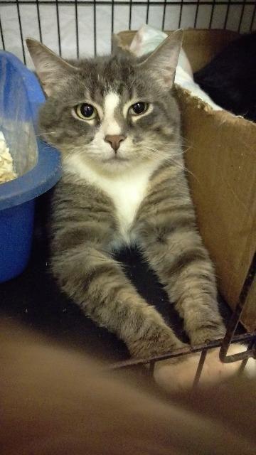 Adopt Harper On Adoption Cat Illnesses Cat Adoption
