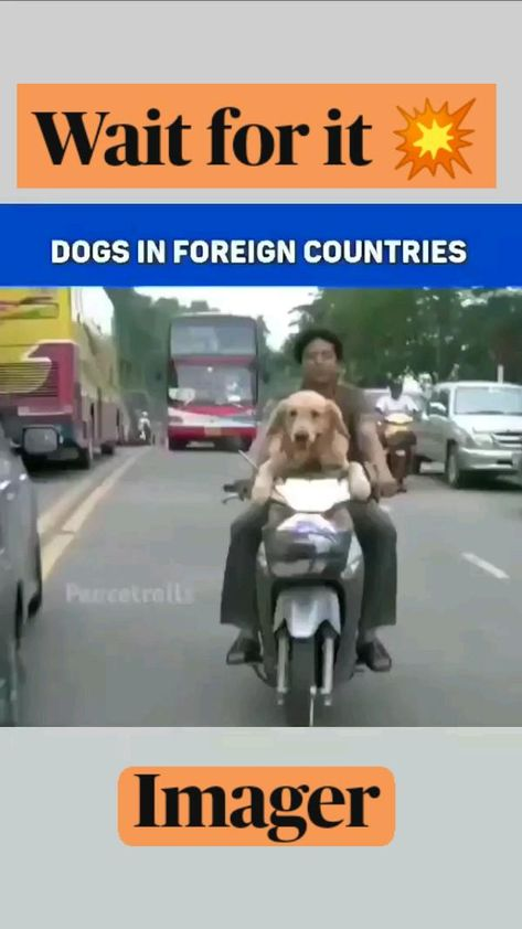 Wait for it 💥  dont miss the india dogs..