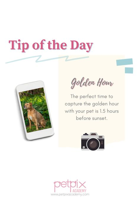 Try this tip and capture you furbabies during the golden hour. Join PetPix Academy NOW! And learn more. #petphotography #petportraits #goldenhour #dogphotography #tipoftheday