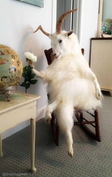 Taxidermy is weird but so am I Cute Baby Animals, Animals And Pets, Funny Animals, Bad Taxidermy, Fluffy Cows, World Of Interiors, Animal Memes, Cute Babies, Weird