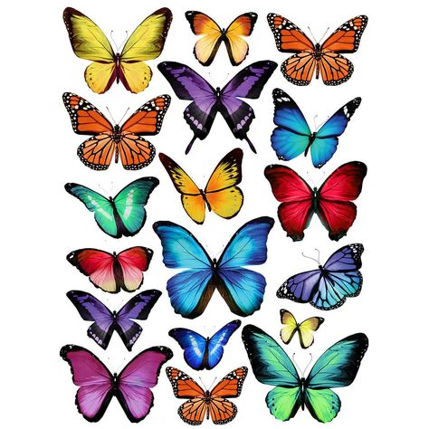 24 in. x 17.5 in. Papillion Multi Wall Decal, Multi-Color