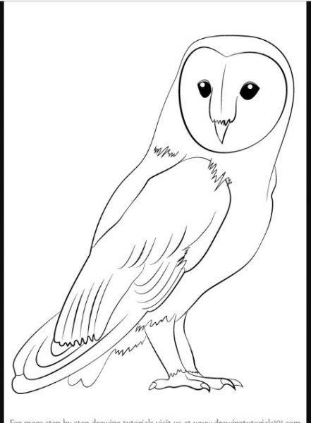 Fantastis 30 Gambar Karikatur Kartun Mudah Kumpulan Sketsa Gambar Burung Elang Hantu Merpati Merak Do Burung Hantu Barn Owl Gambar Simpel Tato Burung Hantu