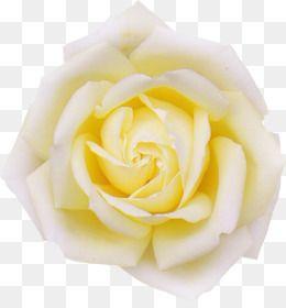 Pin On Recursos Flores Rosas