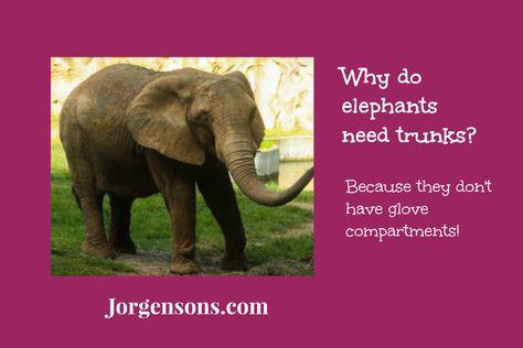 12 best Elephant Jokes! images on Pinterest   Chistes, Funny jokes ...