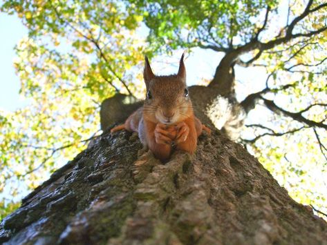 red squirrel on tree trunk #nature #Photography #Makeup #Quotes #Light #Art #Aesthetic #Forest #Beauty #Crafts #Animals #Pictures Fast Crazy Nature Deals. Let's Go.