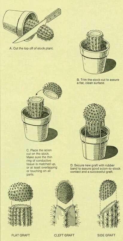 Imgur Com Plants Planting Succulents Cactus