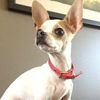 Available Pets At Community Animal Welfare Society In Salt Lake