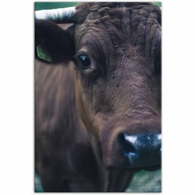 Find Designs Direct Cow Face 20x30 Canvas Wall Art In The Wall Decor Category At Tractor Supply Co Designed With You In Min Cow Photos Cow Eyes Cow Photography