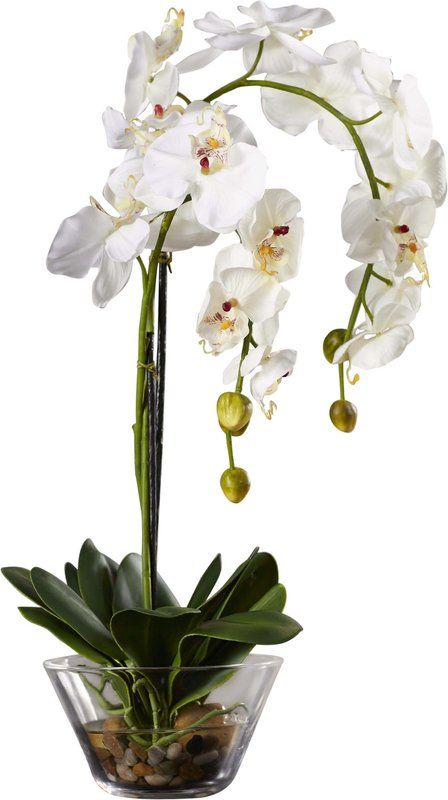 Faux White Phalaenopsis Orchid In Glass Vase Orchid Flower Arrangements Flower Vase Arrangements Flower Arrangements Simple