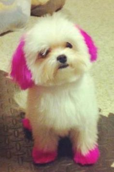 Více než 25 nejlepších nápadů na Pinterestu na téma Dog hair dye ...