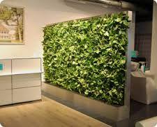 Bildergebnis Für Raumteiler Pflanzen | Office Ideas | Pinterest |  Raumteiler, Pflanzen Und Büros