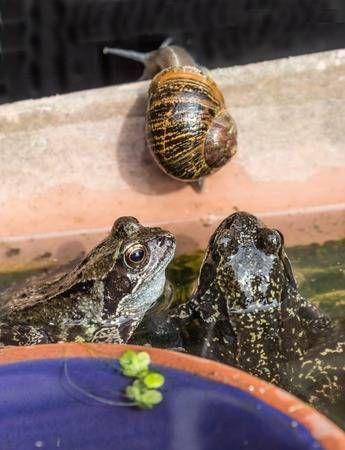 Gemeinsame Garten Frosche Und Schnecken Frosche Frosch Und Krote Lizenzfreie Fotos