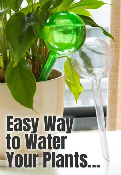 How To Save Money On Plant Watering Bulbs And 3 Reasons Why People Prefer Plastic Over Glass How Often To Refill Yo Plant Watering Bulbs Watering Bulbs Plants