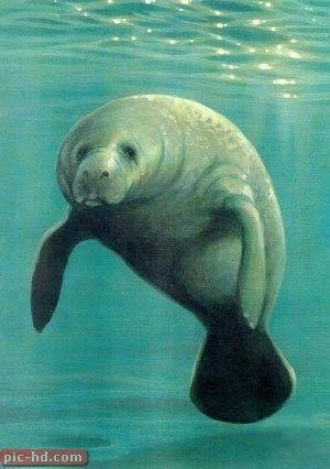 صور خروف البحر معلومات عن خروف البحر Beautiful Sea Creatures Ocean Animals Animals