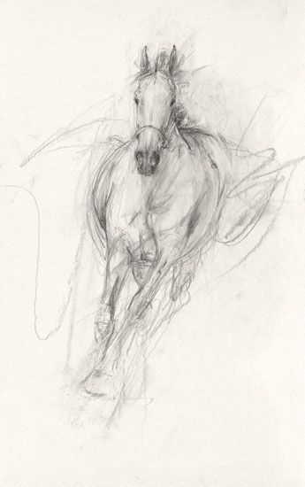 95d9cae5f59 Stunning abstract horse. I like this drawing as it shows the posh look of a  horse in dressarge positions.