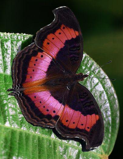 Pin Von Ilona L Auf Schmetterlinge U Motten Schone