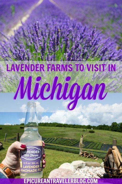 Want to see beautiful lavender fields? Visit these eight lavender farms in Michigan, USA. #PureMichigan #lavender #agritourism #lavenderfields #lavenderfarms #Michigan #MidwestTravel #UStravel #travelusa