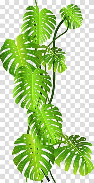 Green Leafed Plant Tropics Jungle Tropical Rainforest Green Coconut Leaves Transparent Backgro Plant Illustration Flower Illustration Tropical Illustration